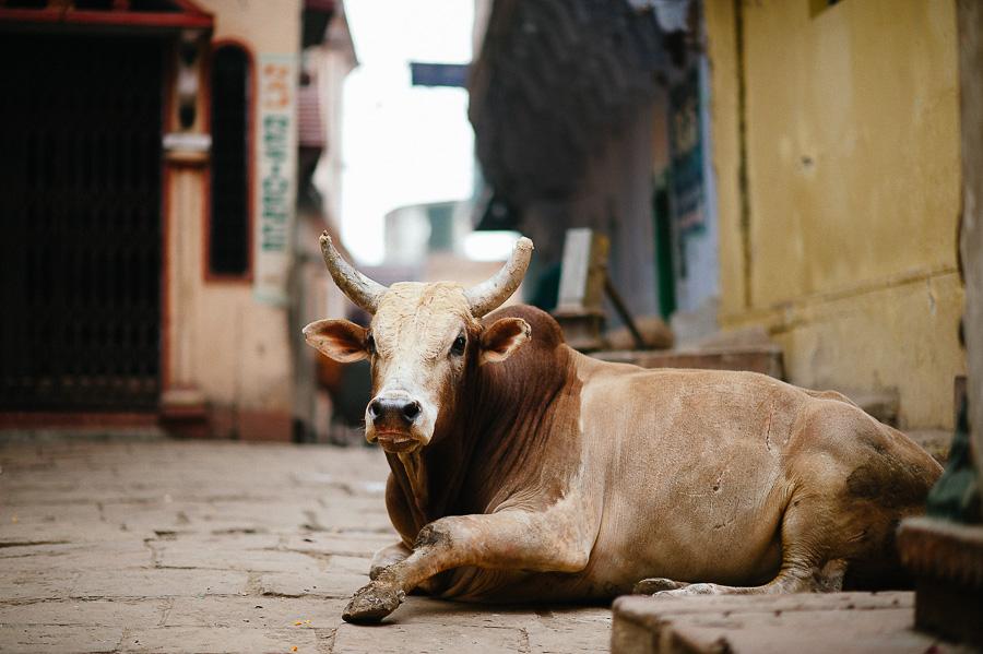 Simon-Mikolasch_Indien_Fernwehosophy_Travel_Photography (38).jpg
