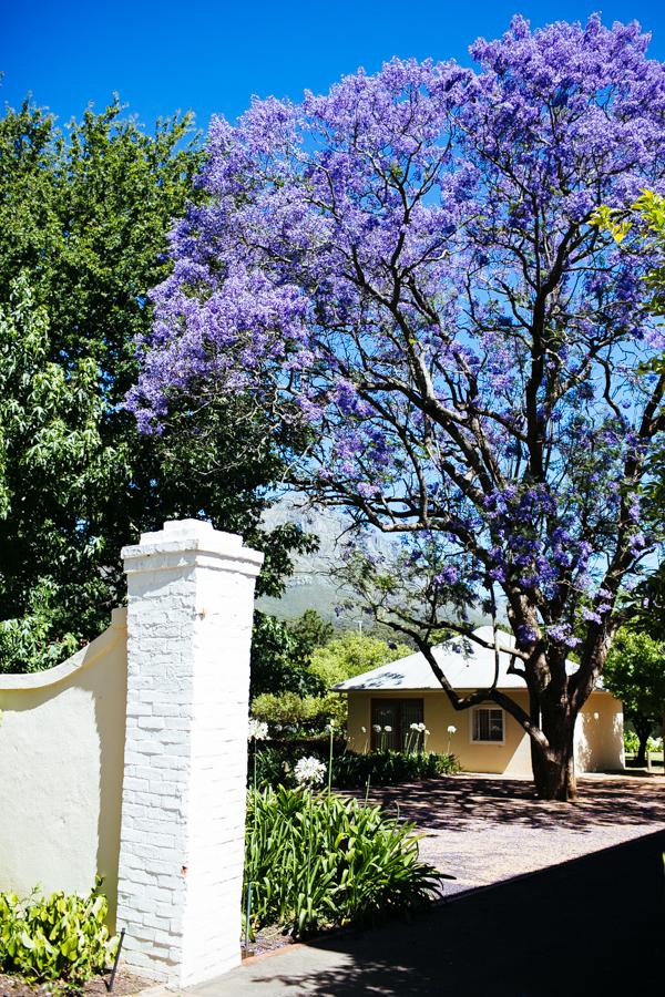 Südafrika_Julia_Hofmann (72 von 100).jpg