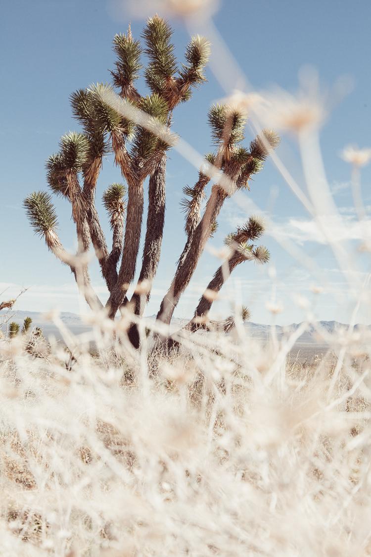 Fernwehosophy_Kalifornien+Nevada-087.jpg