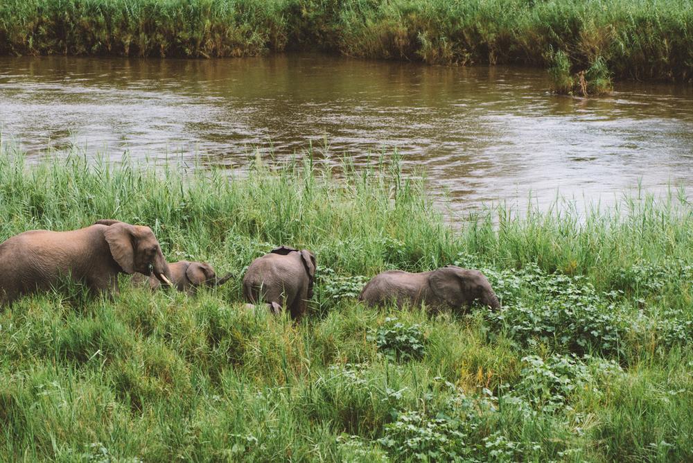 Lion Sands Kruger Park Fernwehosophy Elisaveta Schadrin-Esse (98).jpg