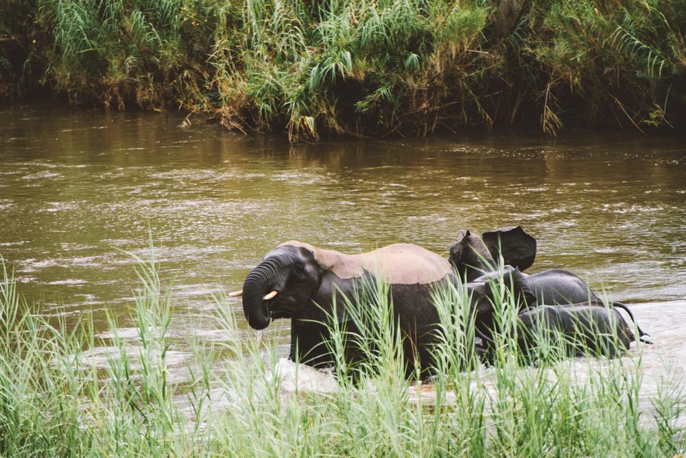 Lion Sands Kruger Park Fernwehosophy Elisaveta Schadrin-Esse (102).jpg