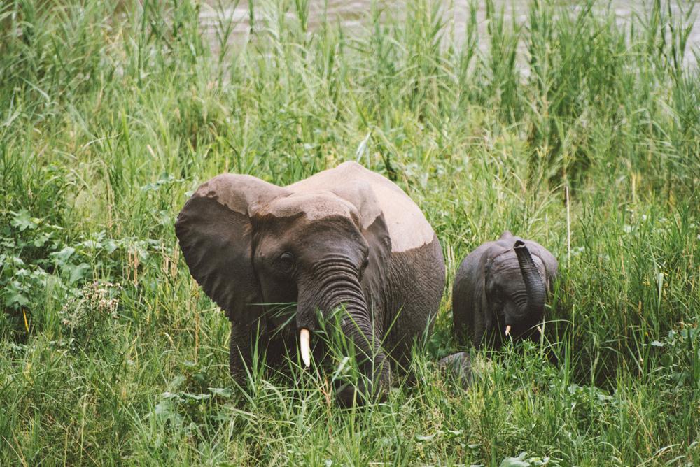 Lion Sands Kruger Park Fernwehosophy Elisaveta Schadrin-Esse (103).jpg