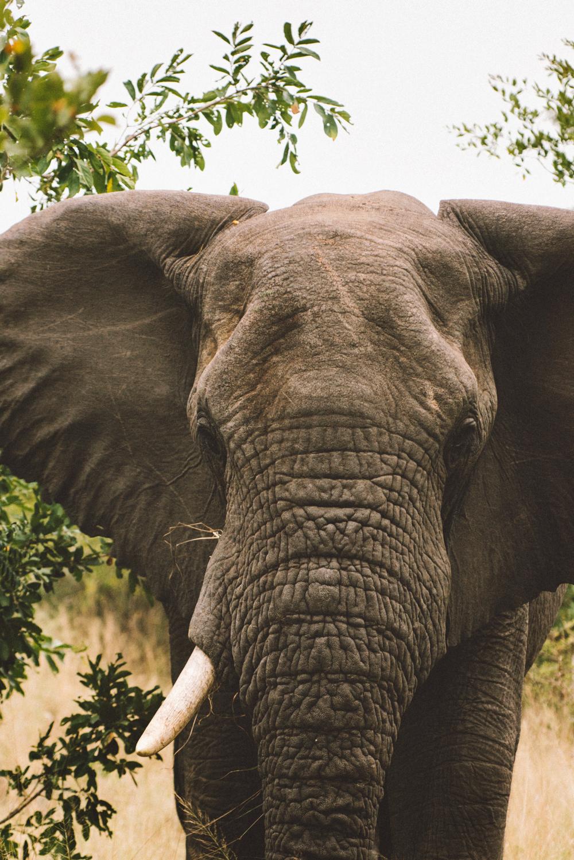 Lion Sands Kruger Park Fernwehosophy Elisaveta Schadrin-Esse (105).jpg
