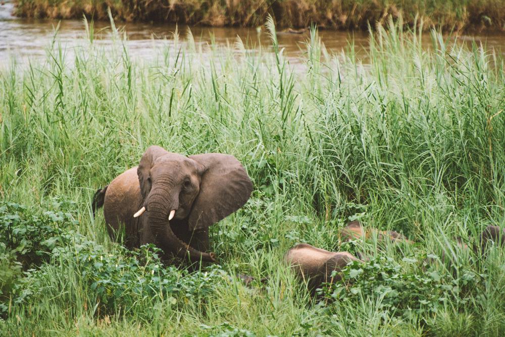 Lion Sands Kruger Park Fernwehosophy Elisaveta Schadrin-Esse (104).jpg