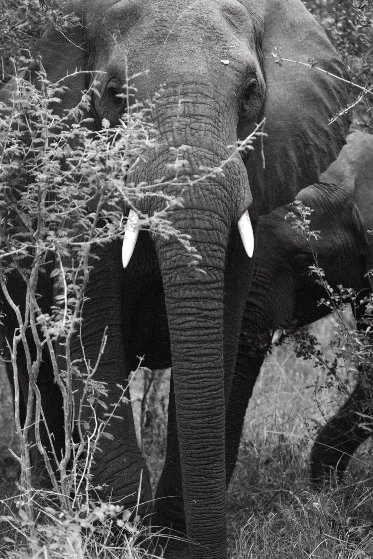 Lion Sands Kruger Park Fernwehosophy Elisaveta Schadrin-Esse (106).jpg