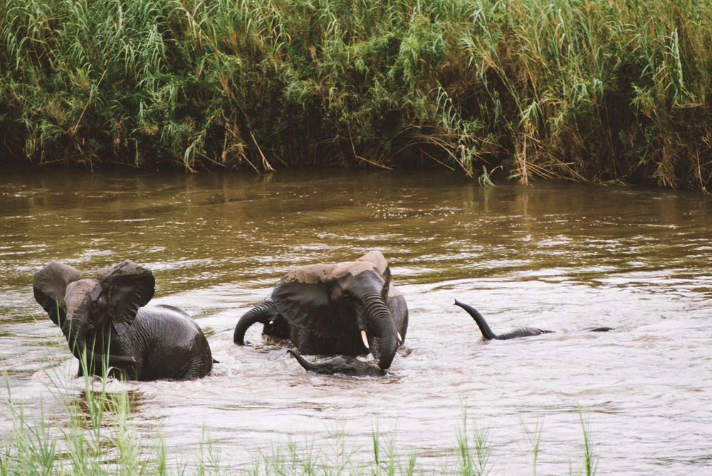 Lion Sands Kruger Park Fernwehosophy Elisaveta Schadrin-Esse (101).jpg