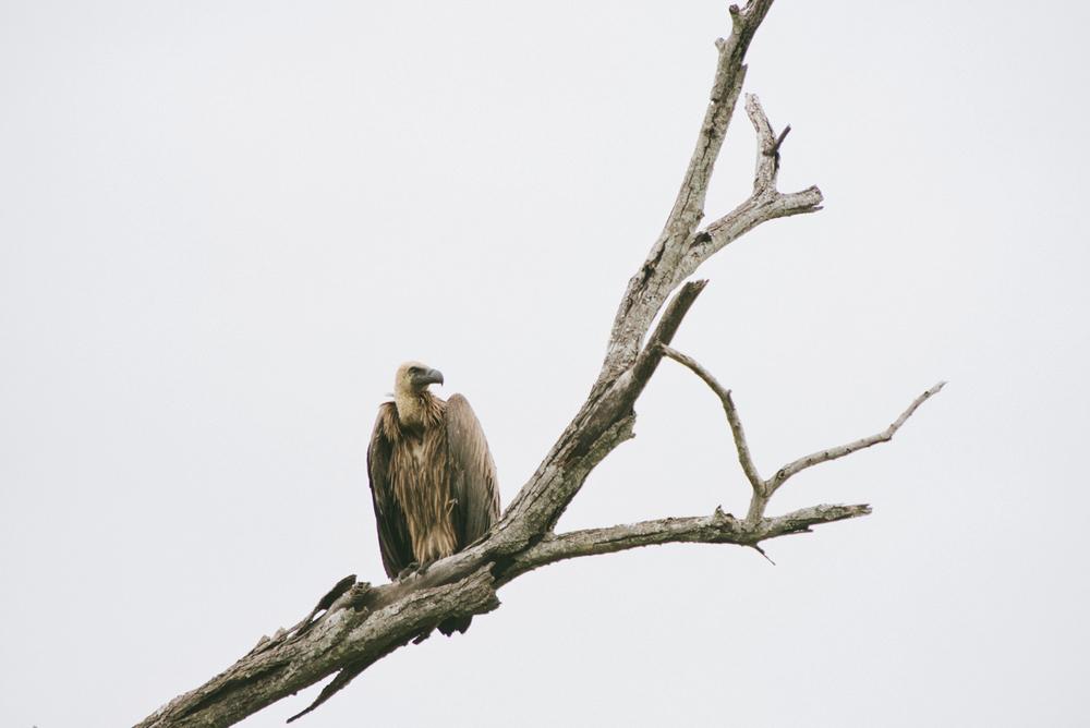 Lion Sands Kruger Park Fernwehosophy Elisaveta Schadrin-Esse (122).jpg