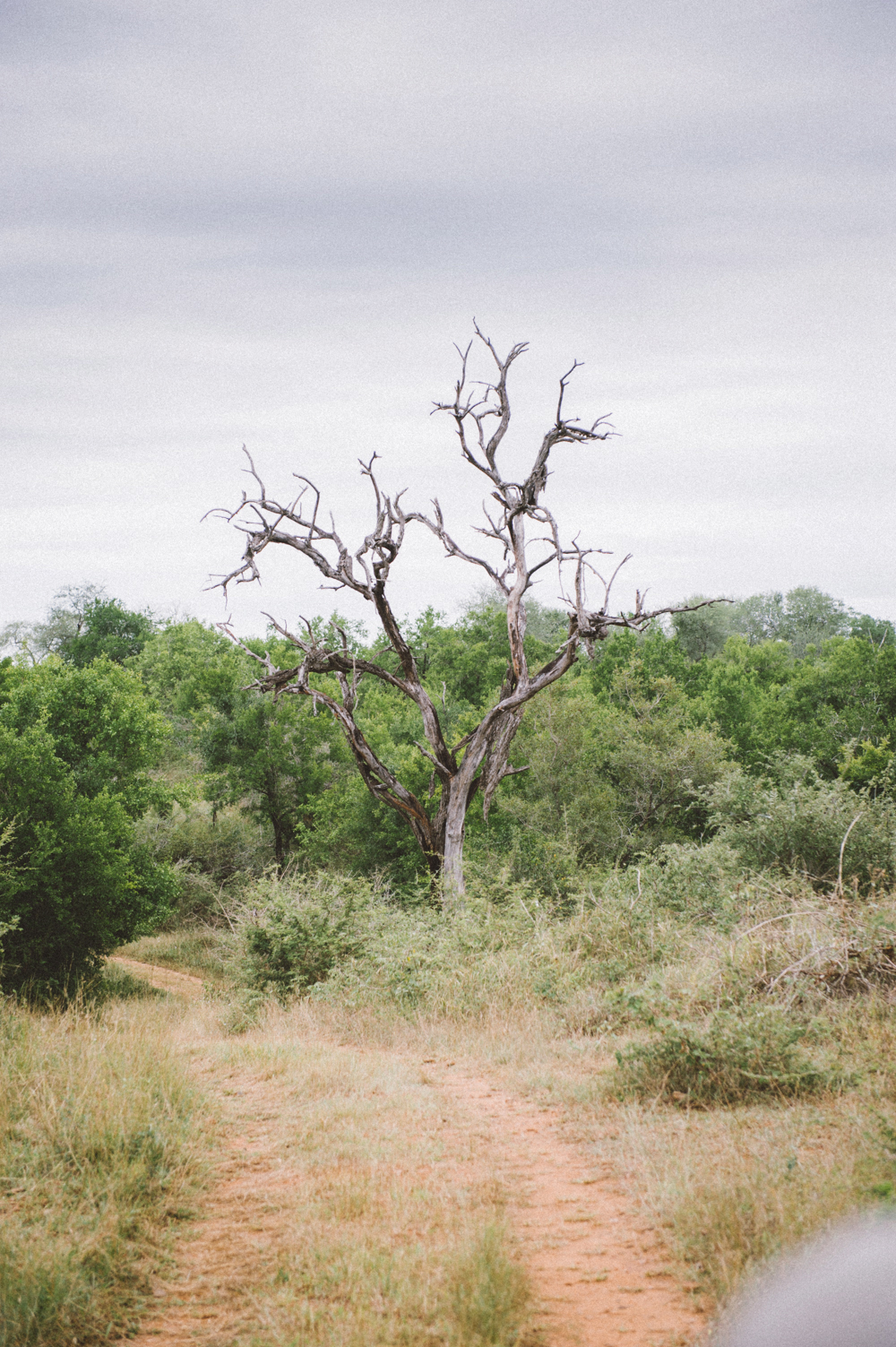 Lion Sands Kruger Park Fernwehosophy Elisaveta Schadrin-Esse (172).jpg