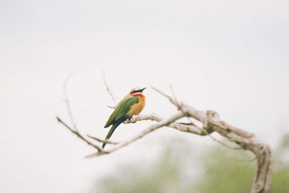 Lion Sands Kruger Park Fernwehosophy Elisaveta Schadrin-Esse (155).jpg