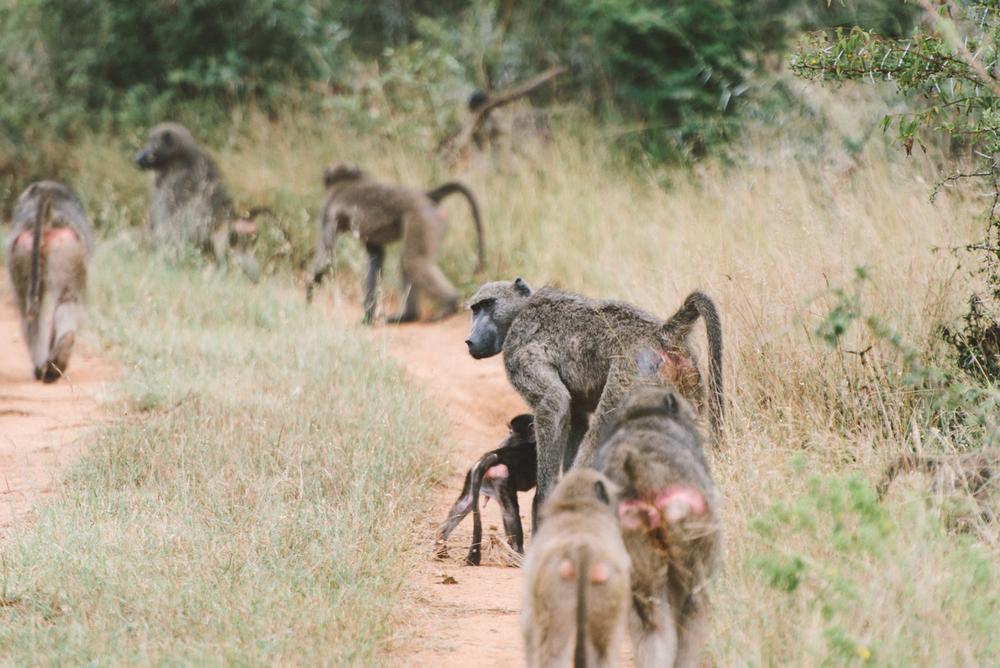 Lion Sands Kruger Park Fernwehosophy Elisaveta Schadrin-Esse (81).jpg