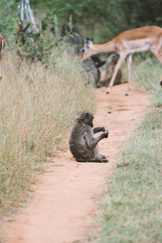 Lion Sands Kruger Park Fernwehosophy Elisaveta Schadrin-Esse (82).jpg
