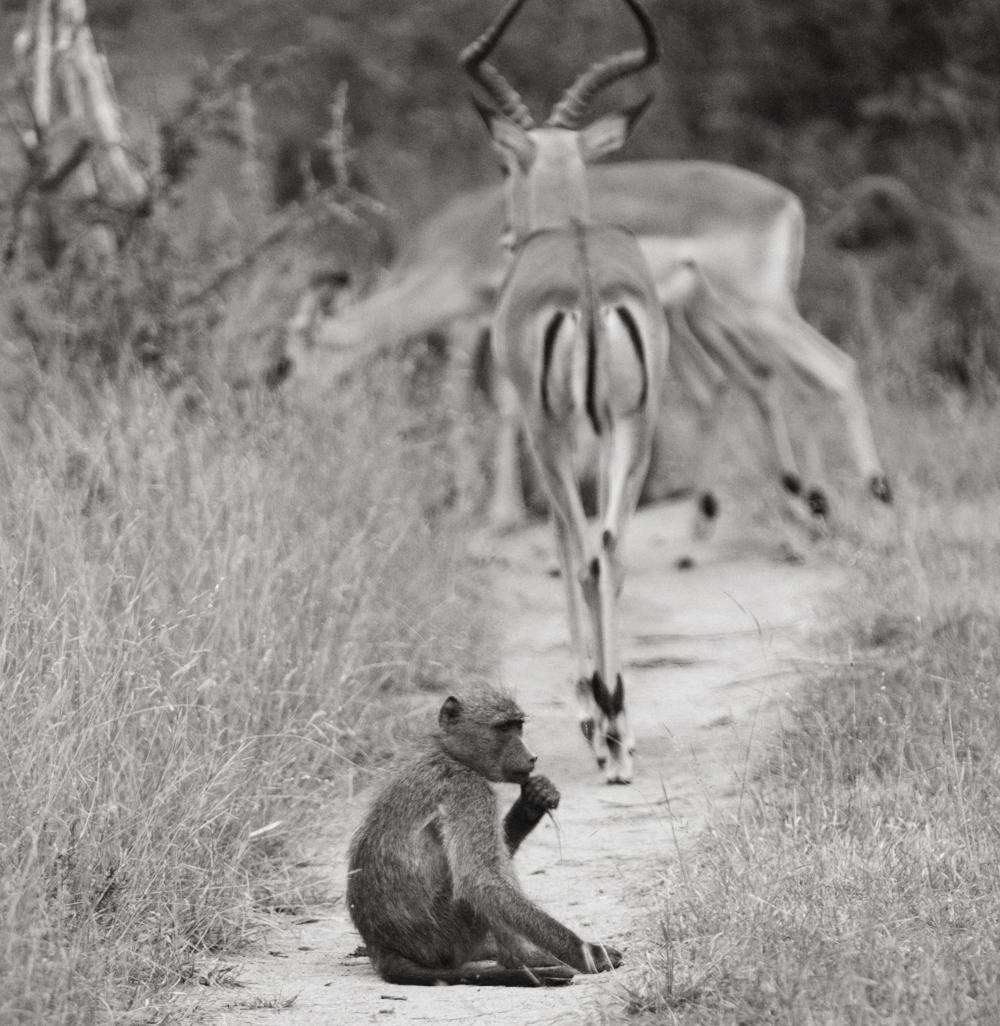 Lion Sands Kruger Park Fernwehosophy Elisaveta Schadrin-Esse (83).jpg