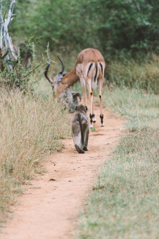 Lion Sands Kruger Park Fernwehosophy Elisaveta Schadrin-Esse (84).jpg