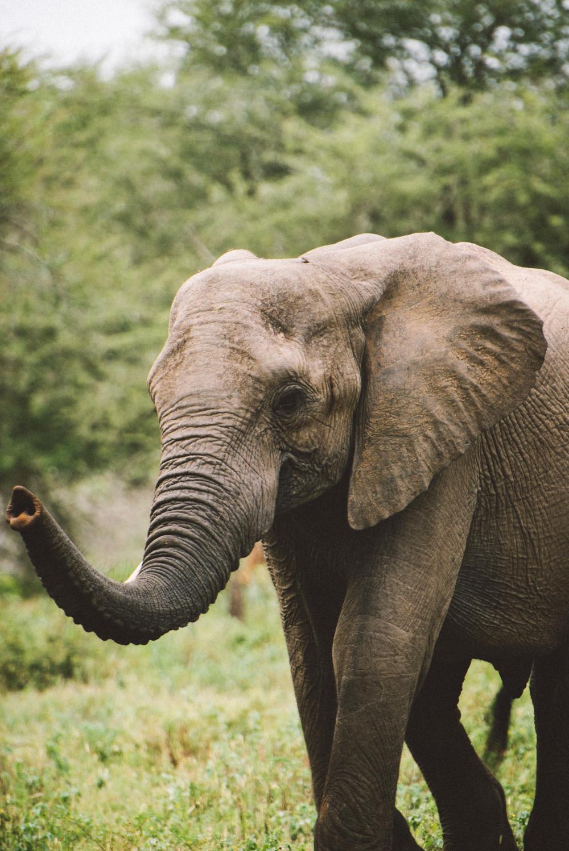 Lion Sands Kruger Park Fernwehosophy Elisaveta Schadrin-Esse (88).jpg