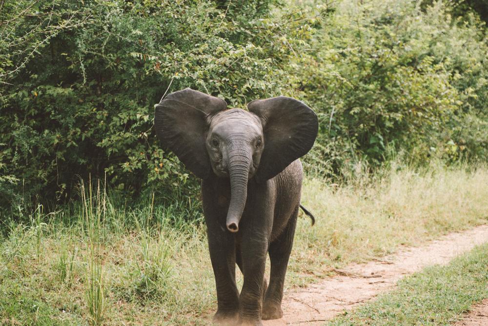 Lion Sands Kruger Park Fernwehosophy Elisaveta Schadrin-Esse (89).jpg