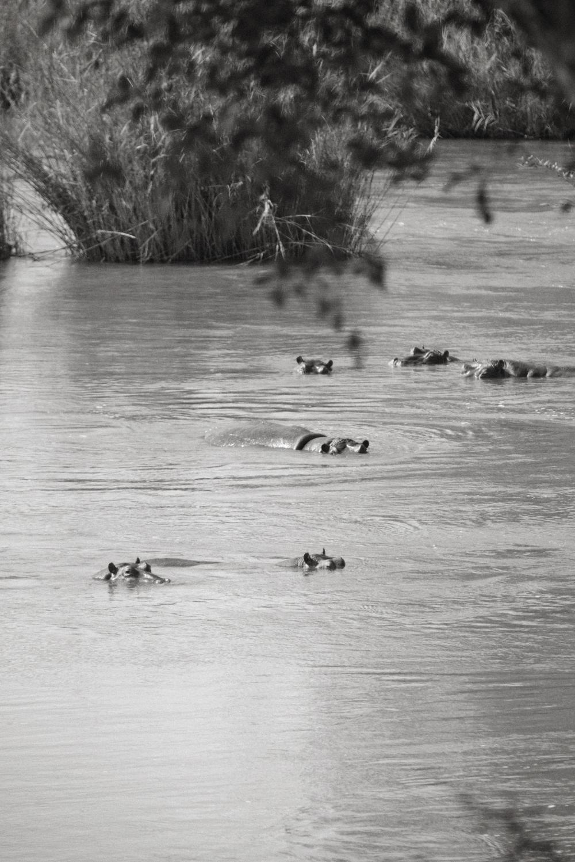 Lion Sands Kruger Park Fernwehosophy Elisaveta Schadrin-Esse (95).jpg