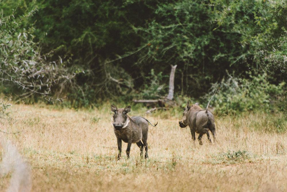 Lion Sands Kruger Park Fernwehosophy Elisaveta Schadrin-Esse (152).jpg