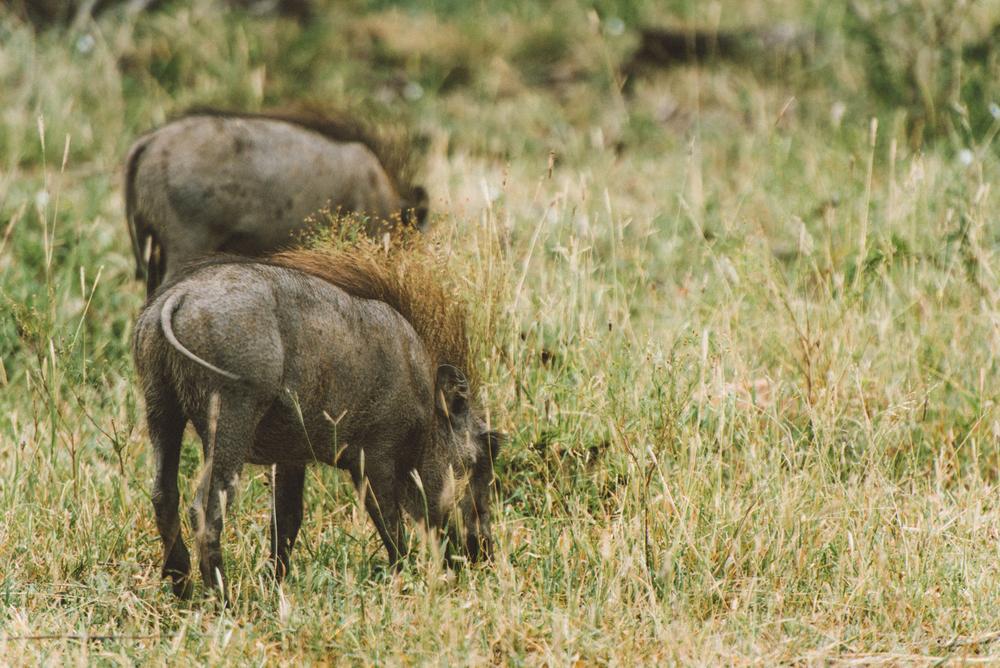 Lion Sands Kruger Park Fernwehosophy Elisaveta Schadrin-Esse (153).jpg