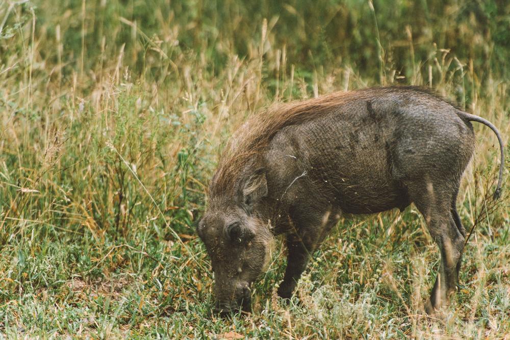 Lion Sands Kruger Park Fernwehosophy Elisaveta Schadrin-Esse (154).jpg