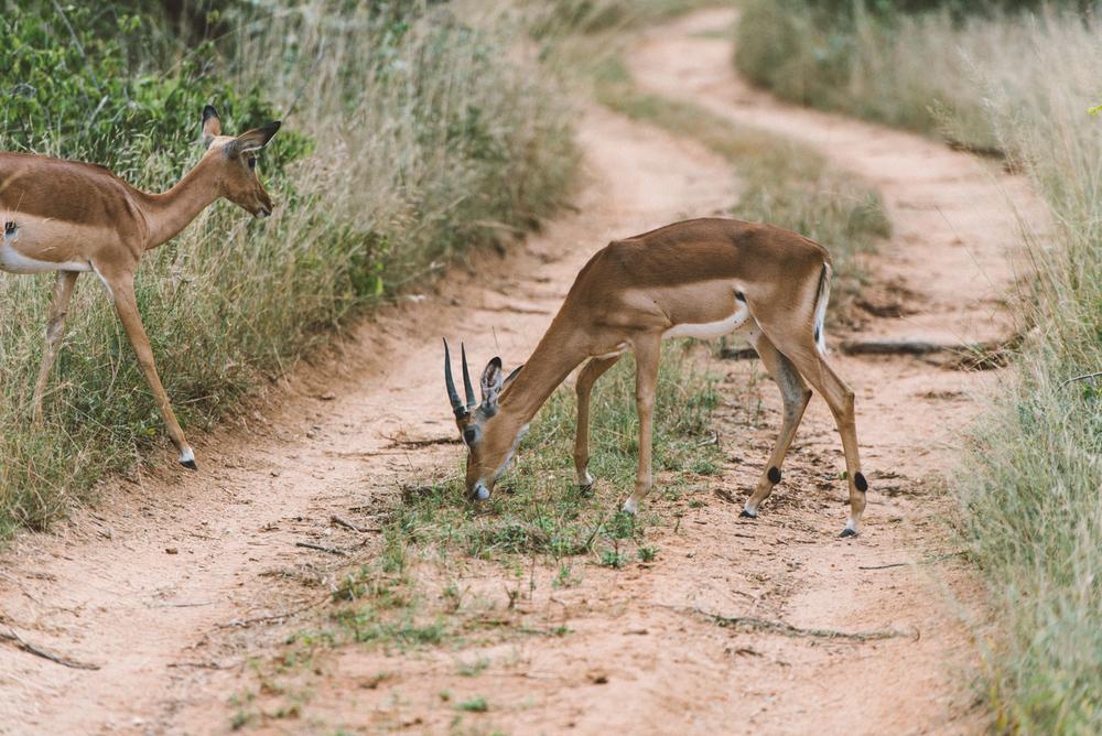 Lion Sands Kruger Park Fernwehosophy Elisaveta Schadrin-Esse (66).jpg