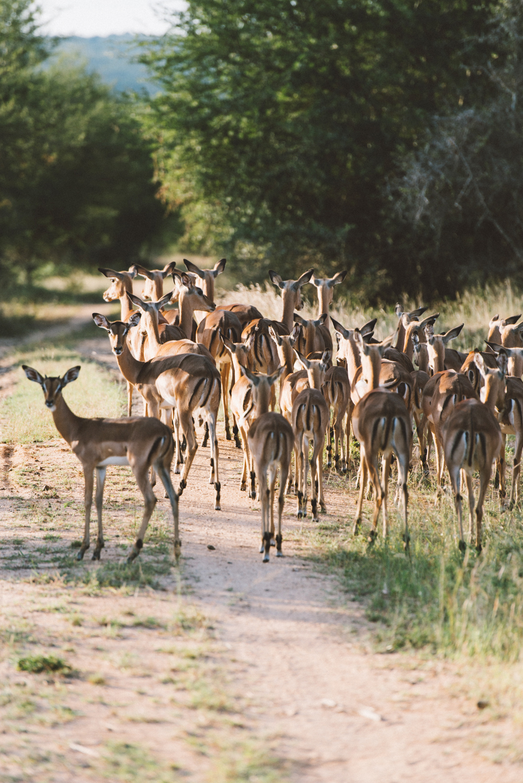 Lion Sands Kruger Park Fernwehosophy Elisaveta Schadrin-Esse (69).jpg