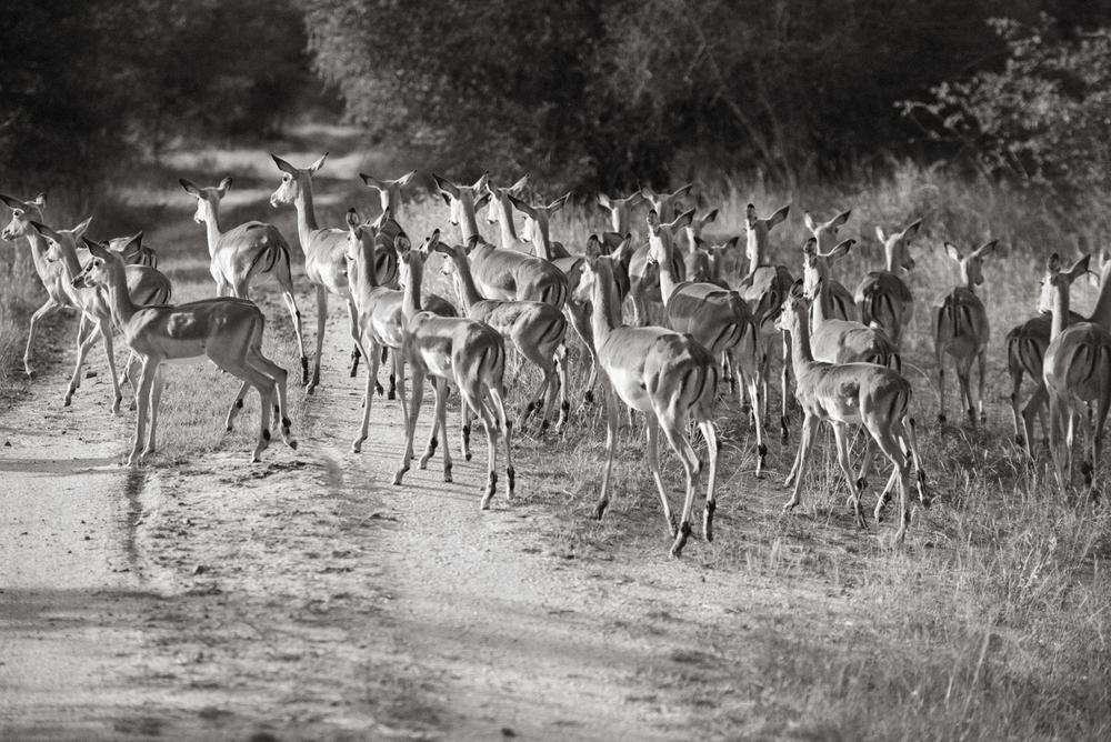 Lion Sands Kruger Park Fernwehosophy Elisaveta Schadrin-Esse (70).jpg