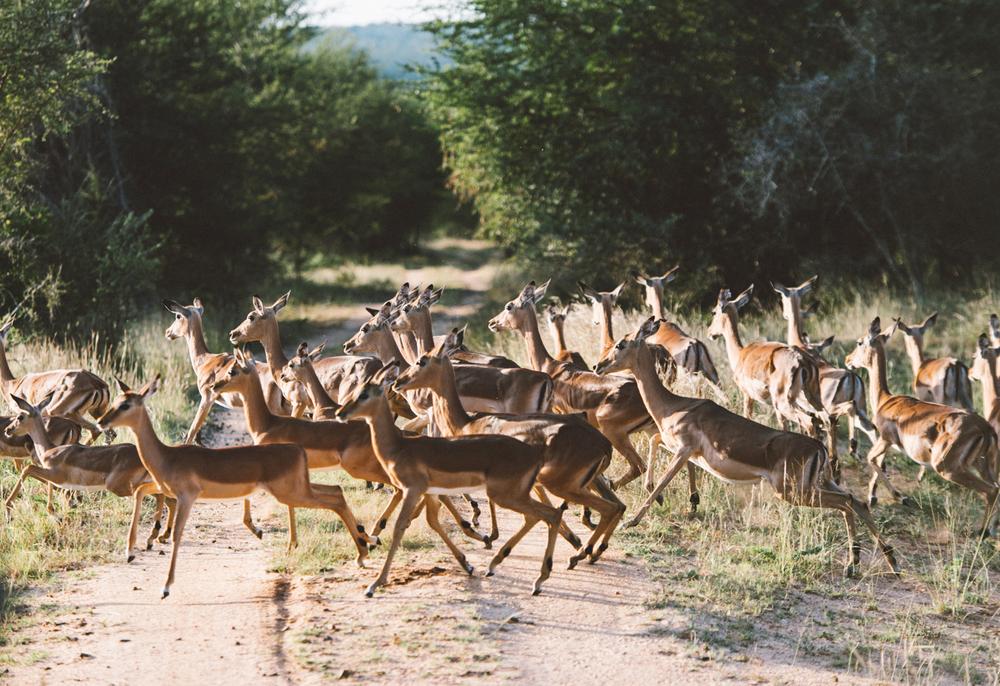 Lion Sands Kruger Park Fernwehosophy Elisaveta Schadrin-Esse (71).jpg