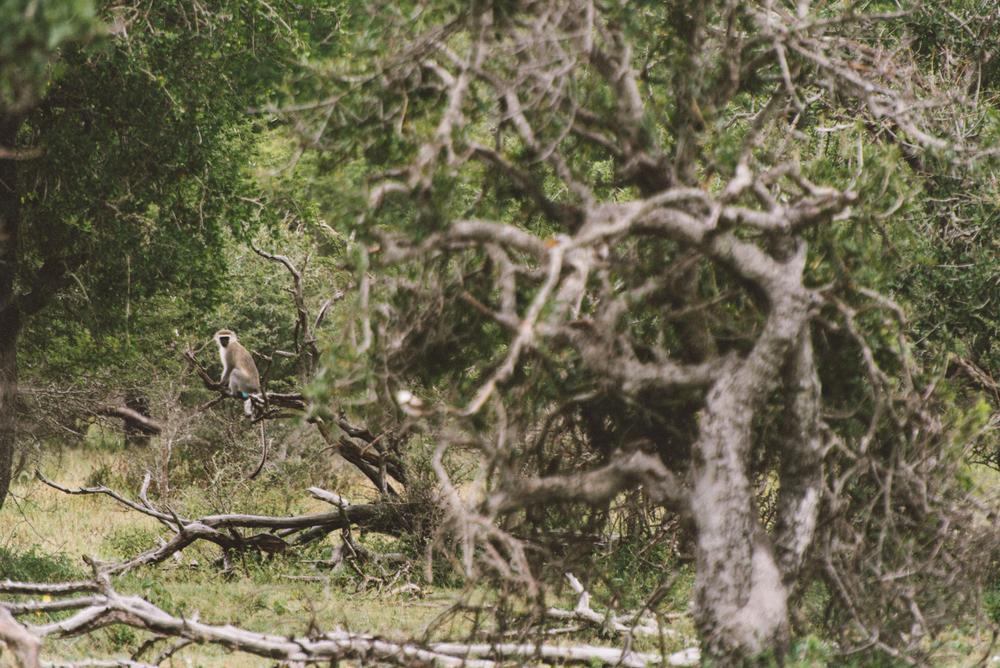 Lion Sands Kruger Park Fernwehosophy Elisaveta Schadrin-Esse (91).jpg
