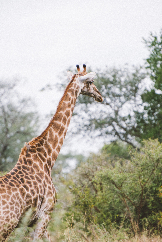 Lion Sands Kruger Park Fernwehosophy Elisaveta Schadrin-Esse (126).jpg