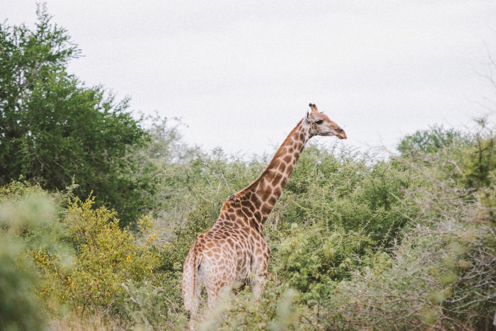 Lion Sands Kruger Park Fernwehosophy Elisaveta Schadrin-Esse (128).jpg