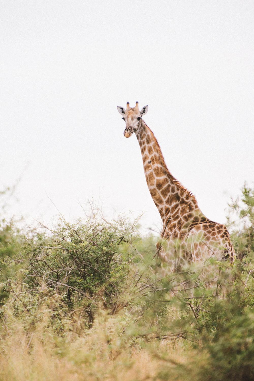 Lion Sands Kruger Park Fernwehosophy Elisaveta Schadrin-Esse (134).jpg