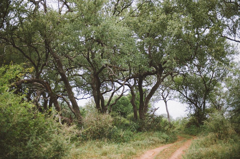 Lion Sands Kruger Park Fernwehosophy Elisaveta Schadrin-Esse (167).jpg