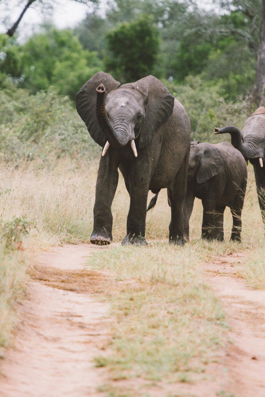 Lion Sands Kruger Park Fernwehosophy Elisaveta Schadrin-Esse (136).jpg