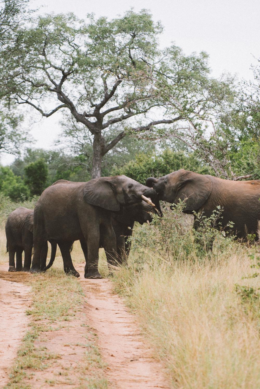 Lion Sands Kruger Park Fernwehosophy Elisaveta Schadrin-Esse (137).jpg