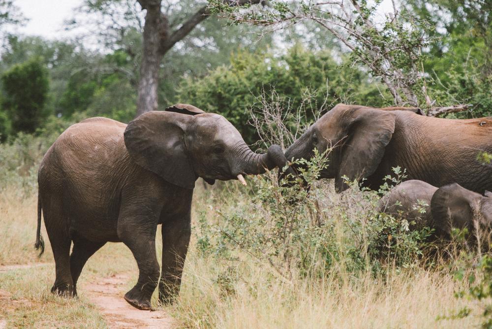Lion Sands Kruger Park Fernwehosophy Elisaveta Schadrin-Esse (138).jpg