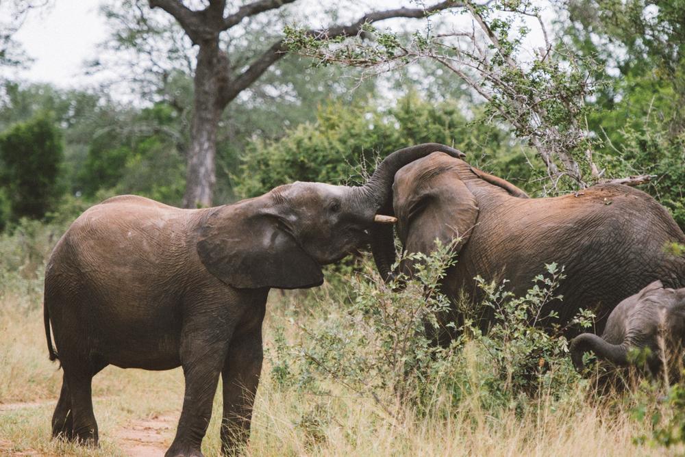Lion Sands Kruger Park Fernwehosophy Elisaveta Schadrin-Esse (139).jpg