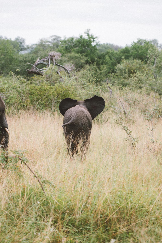 Lion Sands Kruger Park Fernwehosophy Elisaveta Schadrin-Esse (141).jpg