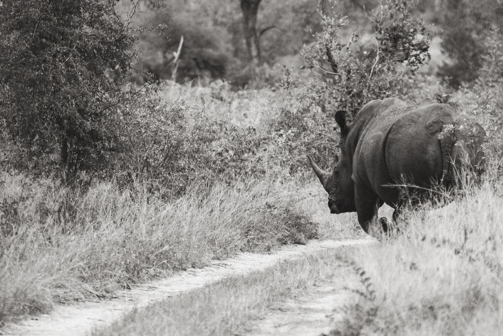 Lion Sands Kruger Park Fernwehosophy Elisaveta Schadrin-Esse (143).jpg