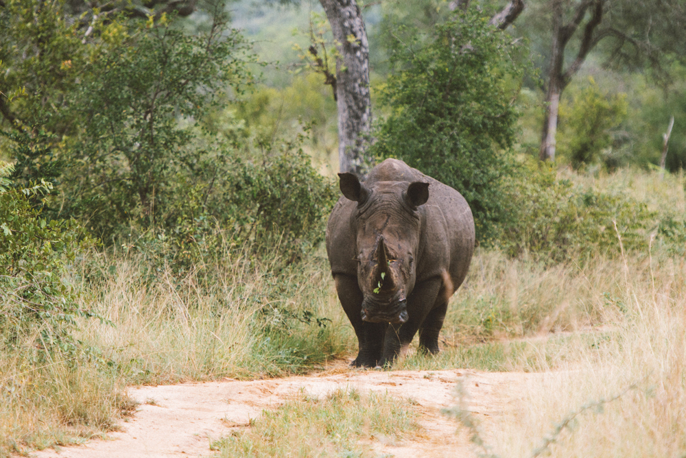 Lion Sands Kruger Park Fernwehosophy Elisaveta Schadrin-Esse (142).jpg