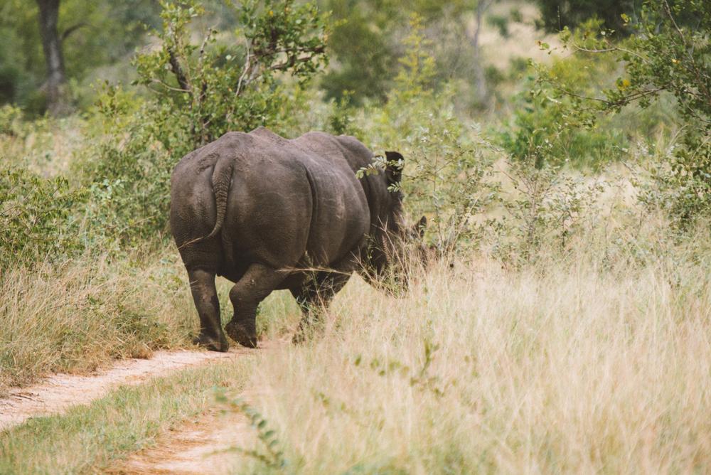 Lion Sands Kruger Park Fernwehosophy Elisaveta Schadrin-Esse (144).jpg