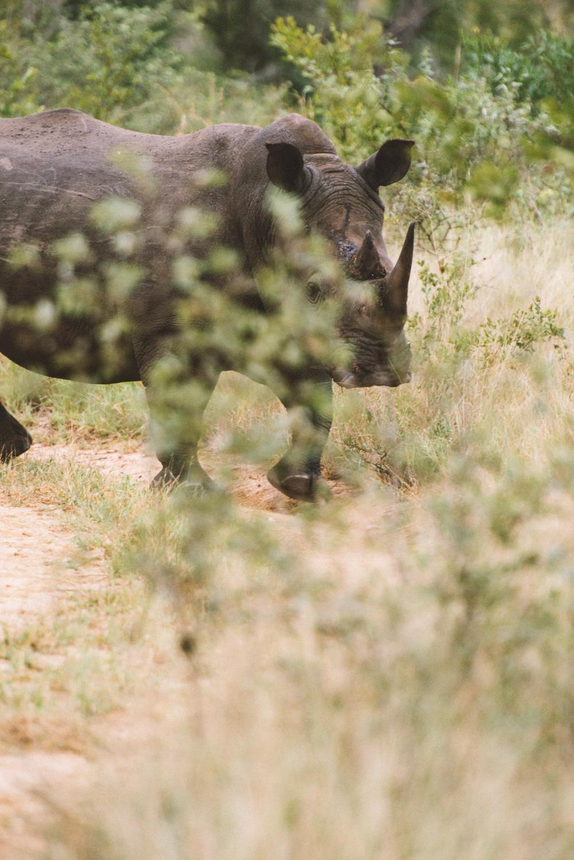 Lion Sands Kruger Park Fernwehosophy Elisaveta Schadrin-Esse (145).jpg