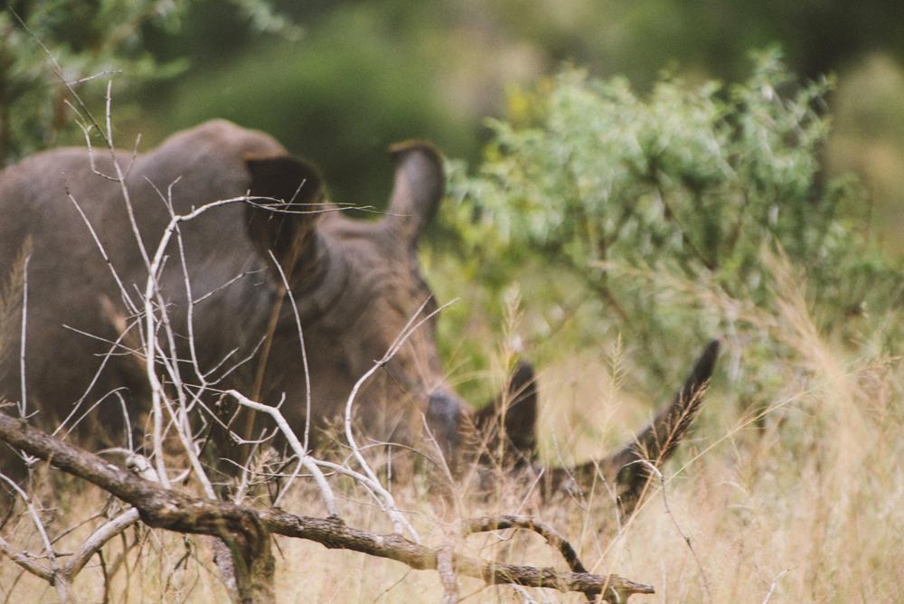 Lion Sands Kruger Park Fernwehosophy Elisaveta Schadrin-Esse (146).jpg