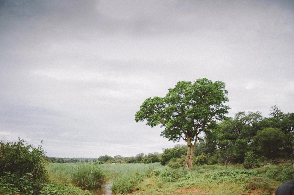 Lion Sands Kruger Park Fernwehosophy Elisaveta Schadrin-Esse (168).jpg