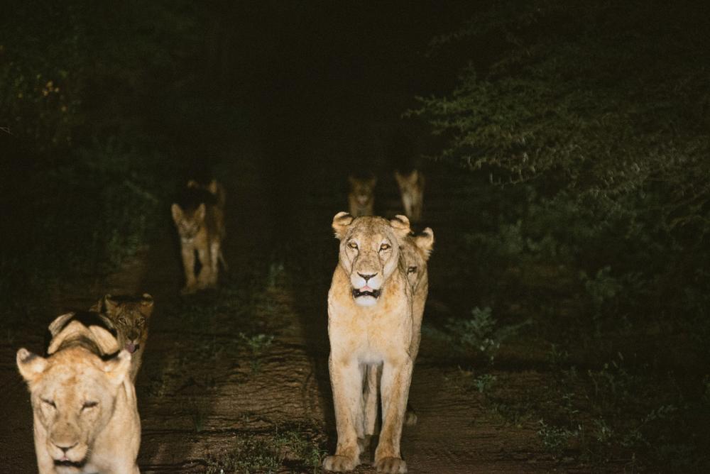 Lion Sands Kruger Park Fernwehosophy Elisaveta Schadrin-Esse (109).jpg