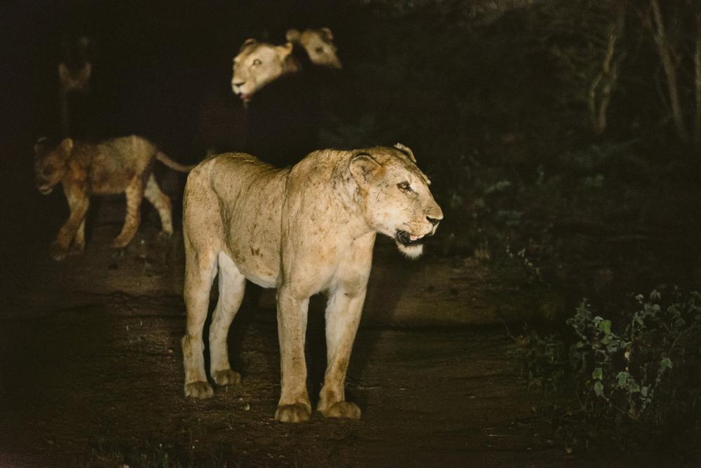 Lion Sands Kruger Park Fernwehosophy Elisaveta Schadrin-Esse (110).jpg