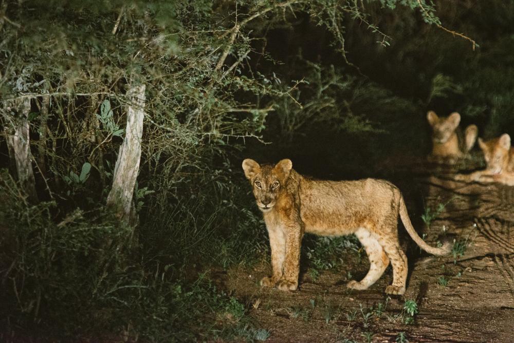 Lion Sands Kruger Park Fernwehosophy Elisaveta Schadrin-Esse (111).jpg
