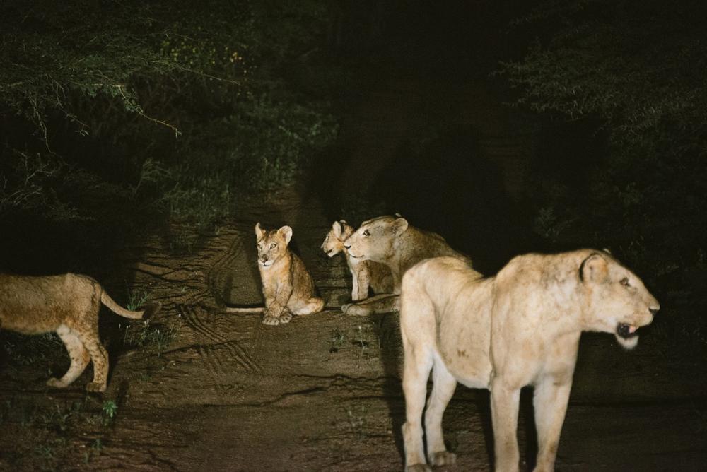 Lion Sands Kruger Park Fernwehosophy Elisaveta Schadrin-Esse (113).jpg