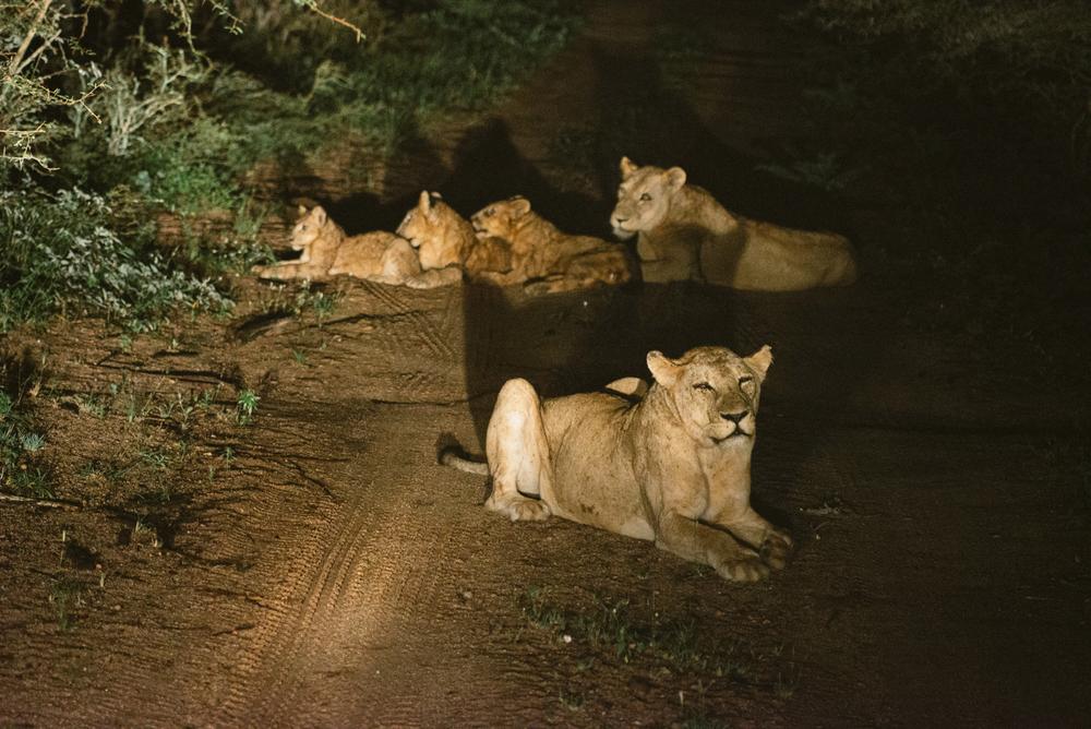 Lion Sands Kruger Park Fernwehosophy Elisaveta Schadrin-Esse (115).jpg