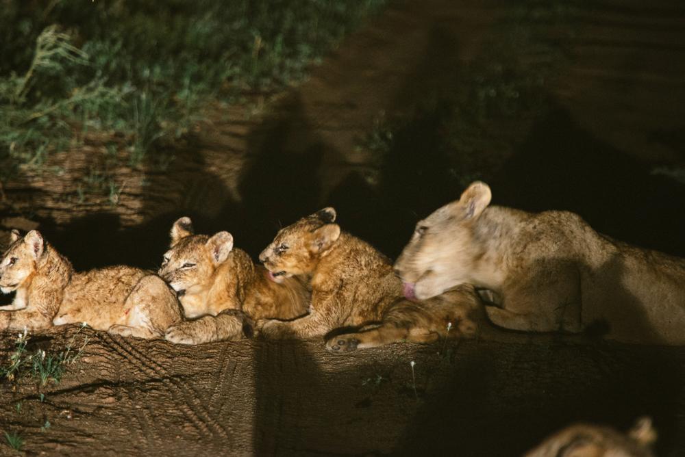 Lion Sands Kruger Park Fernwehosophy Elisaveta Schadrin-Esse (116).jpg