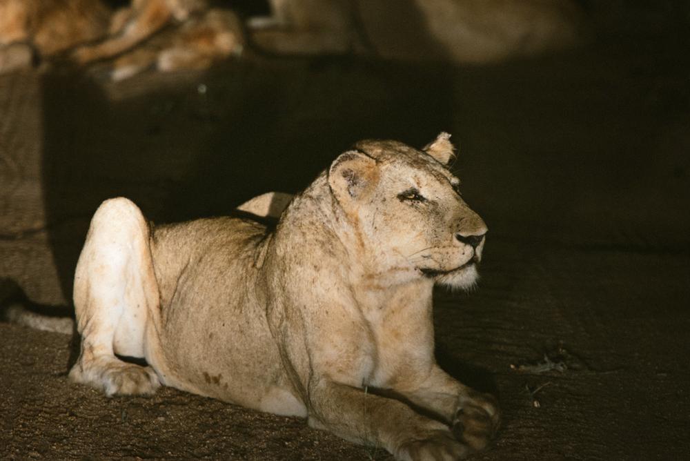 Lion Sands Kruger Park Fernwehosophy Elisaveta Schadrin-Esse (117).jpg